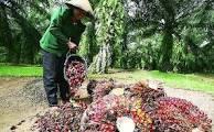 Foto: Lowongan Kerja Asitant Kebun Dan Estate Manager