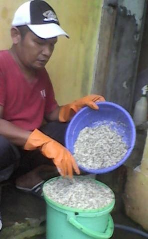 Foto: Ternak Semut Kroto Media Toples