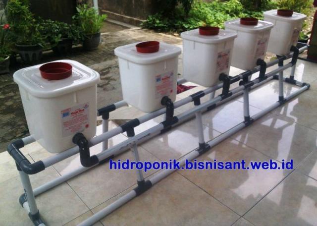 Foto: Sedia Paket Dutch Bucket Hidroponik Untuk Tanam Buah-buahan