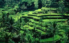 Foto: Paket Tour Medan Bali