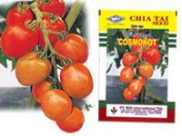 Foto: Benih Tomat F1-cosmonot