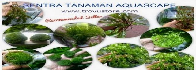 Foto: Suplier Tanaman Air Aquascape