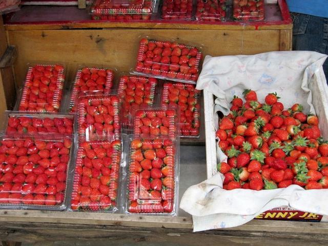 Foto: Strawberry Organik  Tunjungan-Surabay
